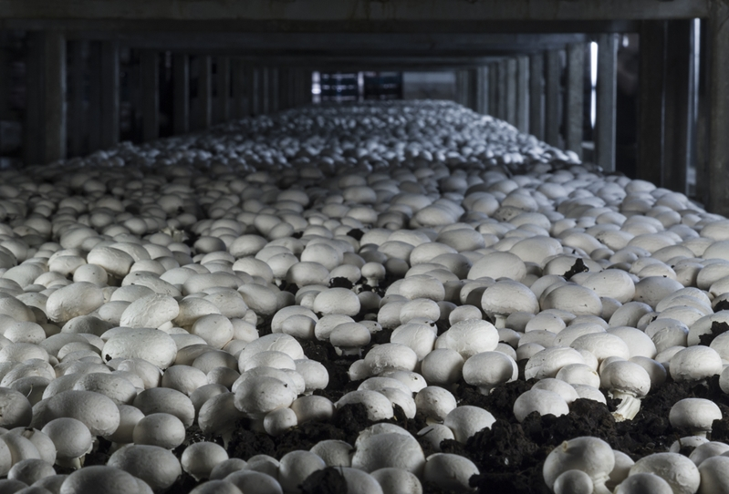 There just won't be enough mushrooms to go around this year.